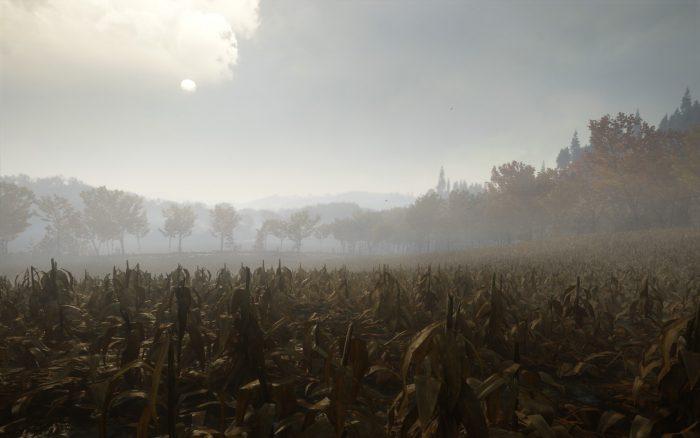 朝靄のトウモロコシ畑