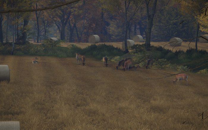 草を食む鹿の群れ