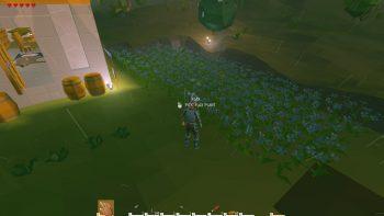 大量の植えたFLAX